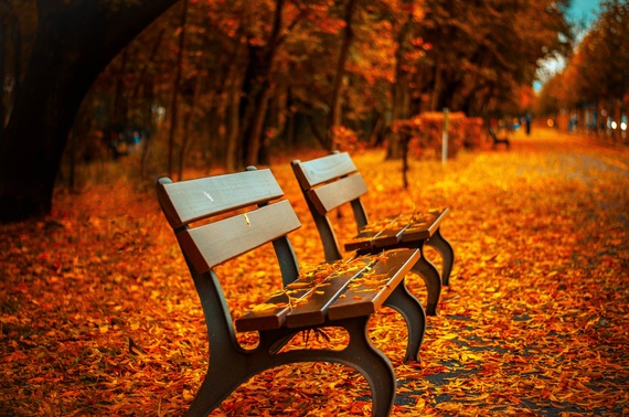 2015-09-25-1443200708-375048-benchforesttreespath.jpeg