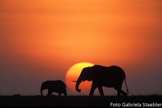 2015-09-28-1443442752-7664384-elefantsunriseb.jpg