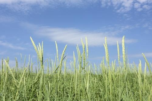 2015-09-29-1443525736-6242584-Orkney_Scotland_grass_and_sky.jpg