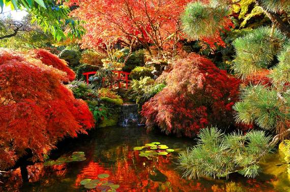 2015-09-29-1443561909-1657271-3autumnfulljapanesemaples.jpg
