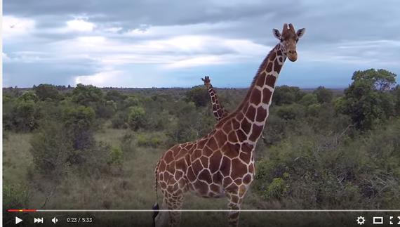 2015-09-30-1443603209-1515775-giraffe.png