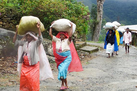 2015-09-30-1443646406-3761580-maisie_srilanka_tea_foodtravels1805_600x400.jpg