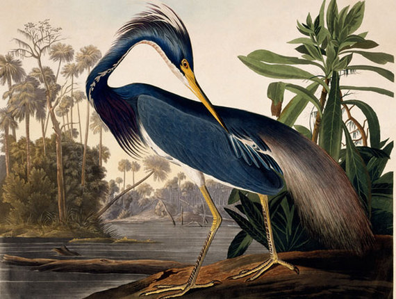2015-10-02-1443806854-3081621-birds1.jpg