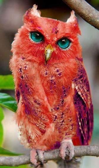 2015-10-02-1443806907-1308776-birds2.jpg