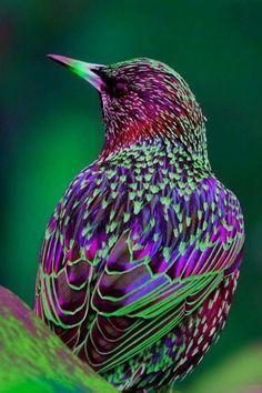 2015-10-02-1443806954-5013608-birds3.jpg