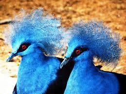 2015-10-02-1443807116-9237847-birds7.jpg