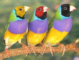 2015-10-02-1443807187-4276014-birds8.jpg