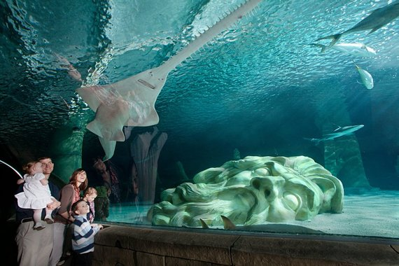 Five Cool Things To Do With Kids In The Twin Cities Huffpost