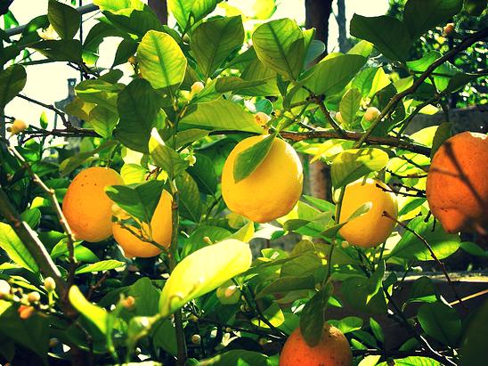 2015-10-04-1443989194-7506126-lemonade.00_jpg_srb