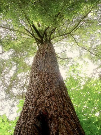 2015-10-05-1444051743-2290349-tree.jpg