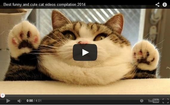2015-10-05-1444080998-8229512-funniestcats.jpg