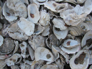 2015-10-06-1444165100-1471017-357_BillionOysterProject.jpg