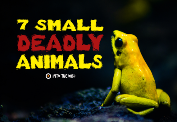 2015-10-09-1444391468-7111369-smalldeadlyanimals.png