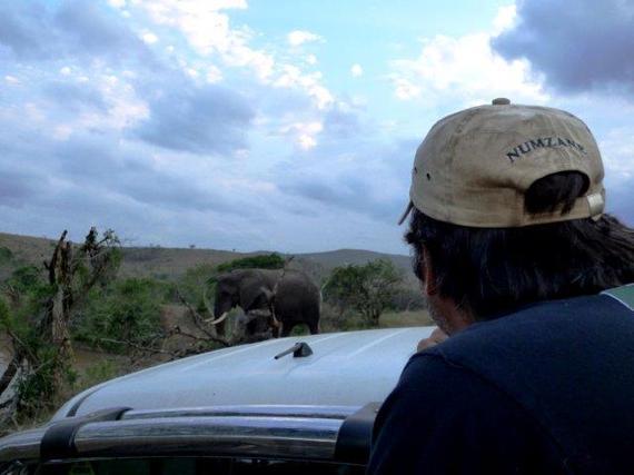 2015-10-09-1444396441-7621322-savingthewild_thula_thula_elephant_utopia_0.jpg