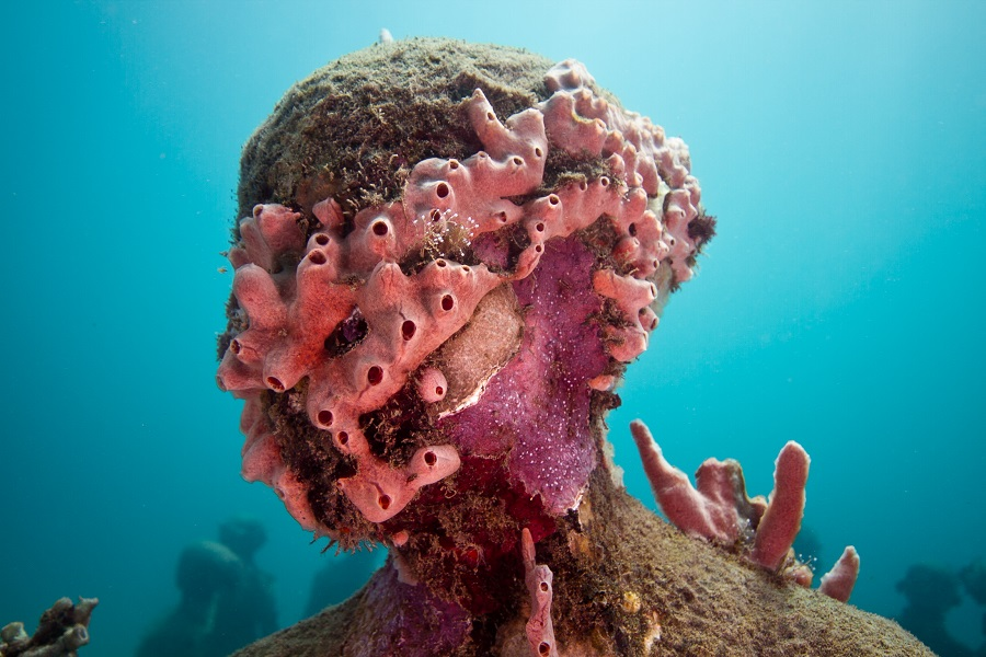 interview with jason decaires taylor huffpost
