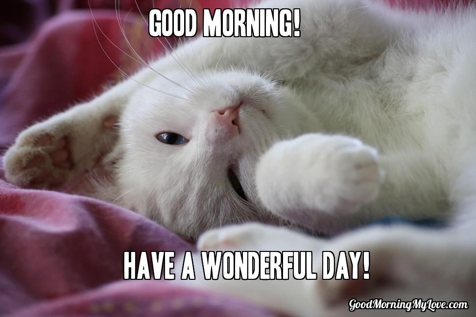 Good Morning Cat Meme : Cute and funny good morning memes huffpost
