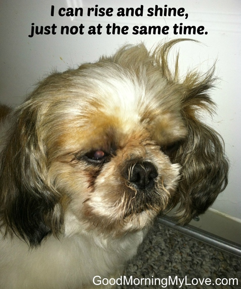 Good Morning Funny Meme : Cute and funny good morning memes huffpost