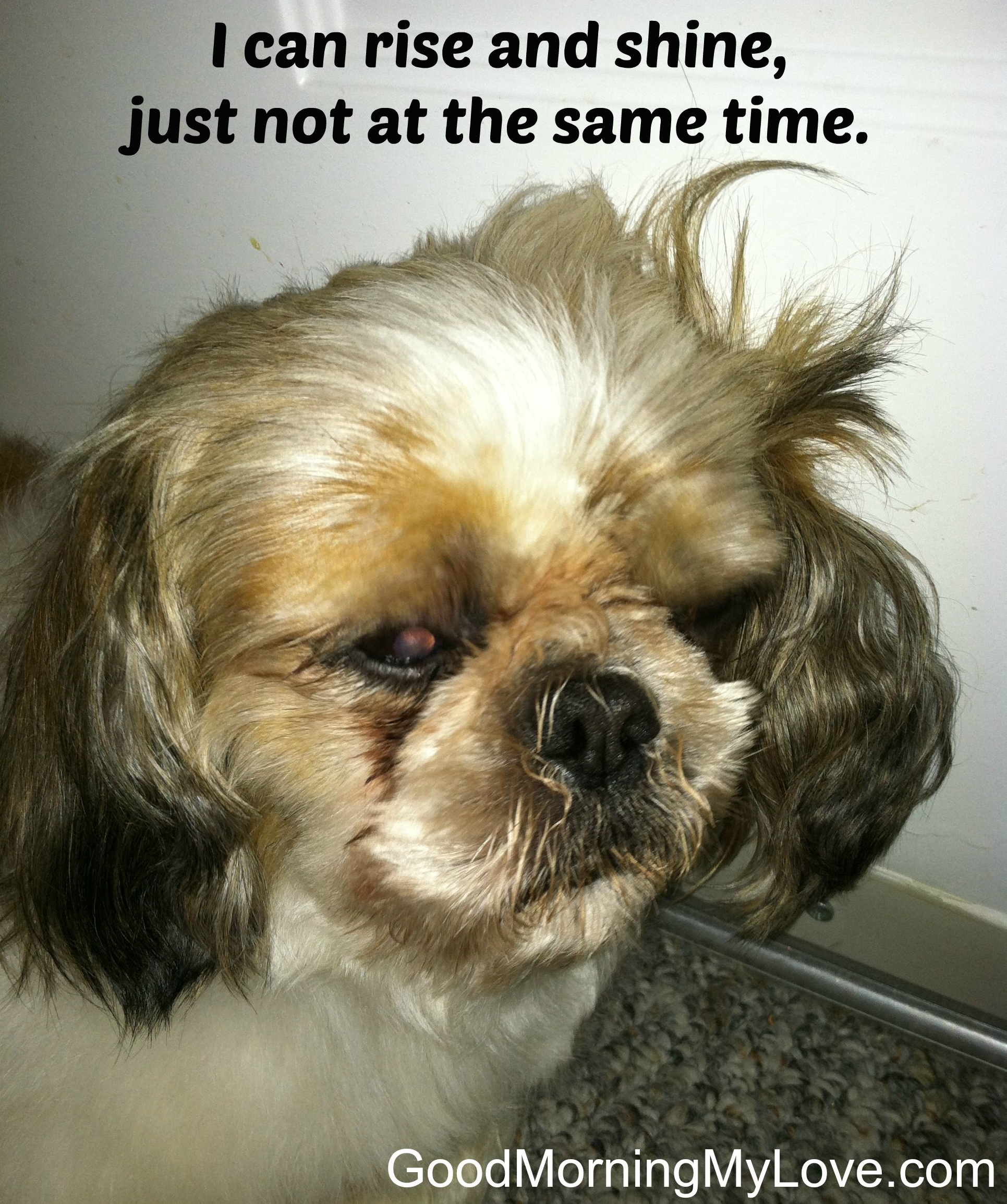 Good Morning Meme Dog : Cute and funny good morning memes huffpost
