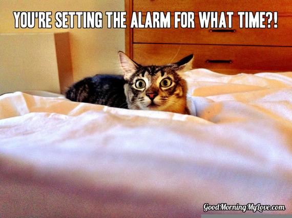 30 Good Morning Meme Pictures That Will Definitely Make ... |Good Morning Cat Meme