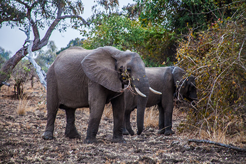 2015-10-13-1444772159-3244991-hufelephants_0212.jpg