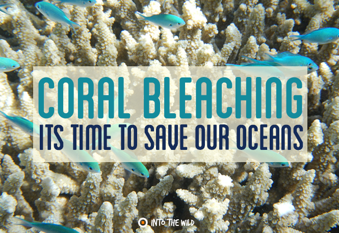 How Does Coral Bleaching Happen