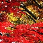 2015-10-15-1444922187-758684-fallcolors.JPG