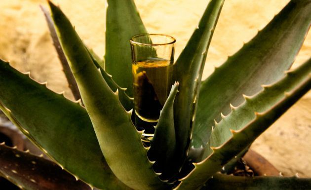 Tequila And Mezcal  Tradition In The Global Market