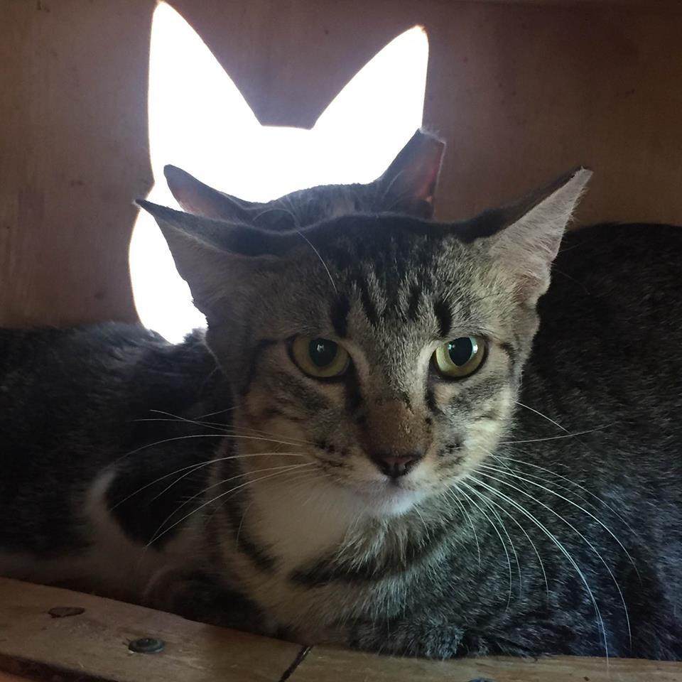 Austin Pets Alive Barn Cats