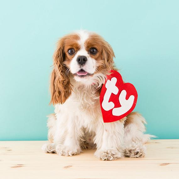 6 Safe Pet Halloween Costumes for Your Dog | Teleflora Blog