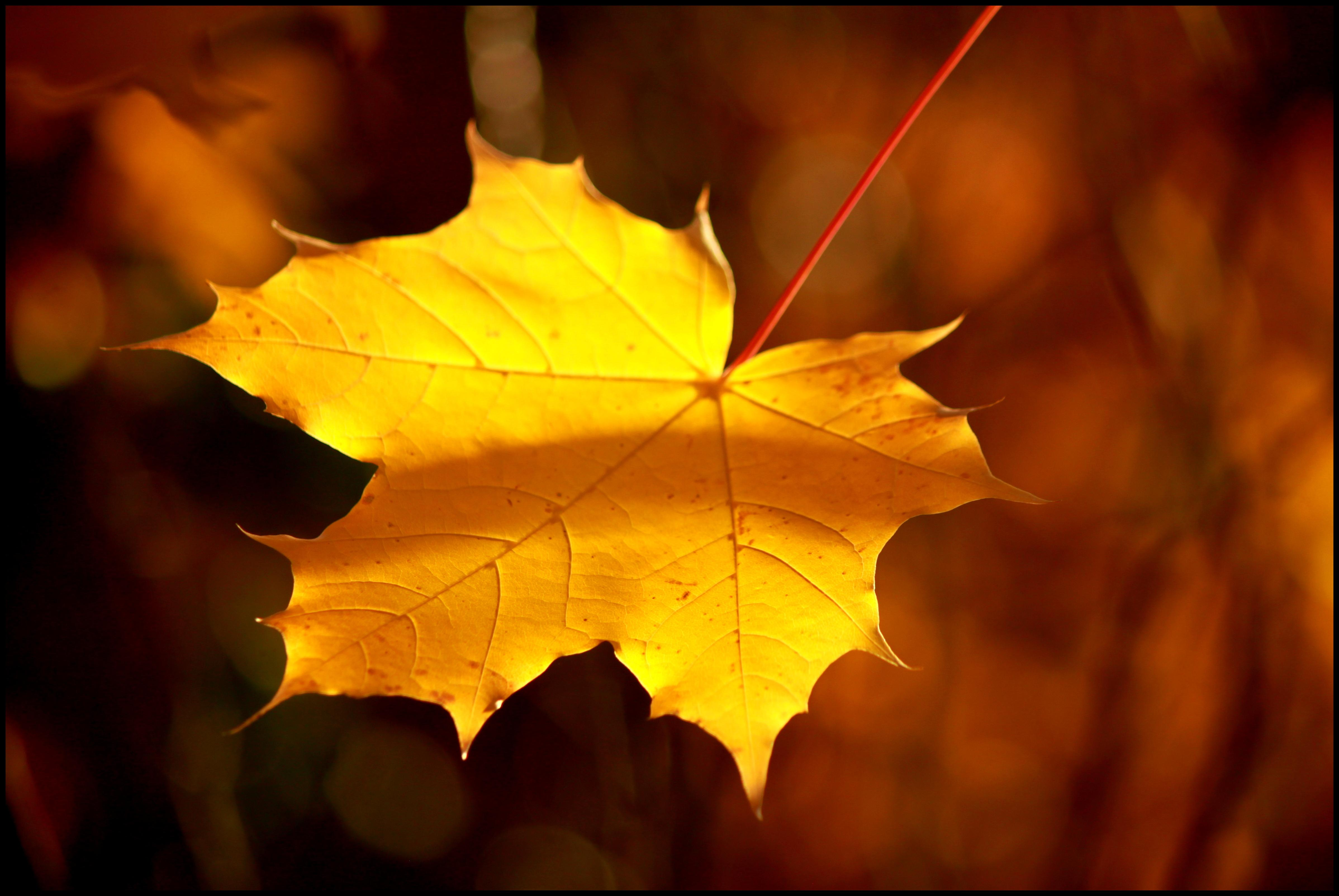 6 Mindfulness Exercises for Children to Celebrate Fall and ...