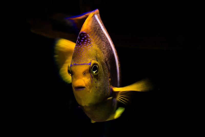 2015-10-26-1445841345-2905501-Fish.jpg