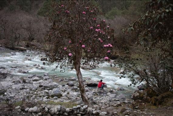2015-10-27-1445930284-4481428-kishorsharmaLangtang.jpg