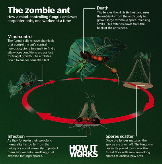 2015-10-27-1445939081-711859-killer_ant.jpg
