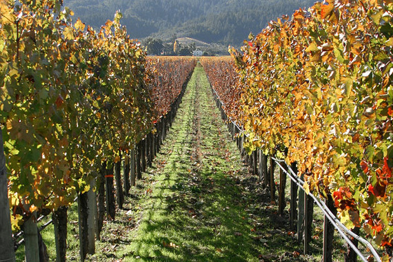 2015-10-27-1445970948-6970990-Lightmatter_vineyard.jpg