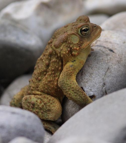 2015-10-29-1446082391-2582842-frog.jpg