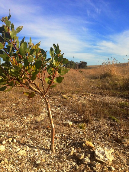 2015-10-29-1446156953-3491800-Tree.jpg