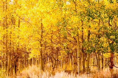 2015-11-03-1446531015-4639068-Trees.jpg
