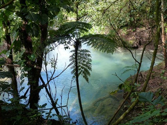 2015-11-03-1446561760-4884292-rainforest515339_1280.jpg