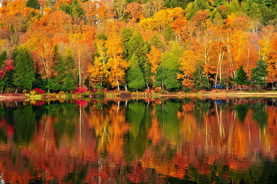2015-11-03-1446576856-9690735-colorfulfallforestSourcewww.getintravel.comccr301.jpg