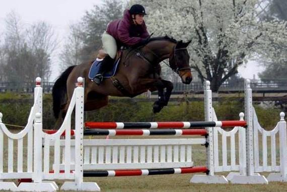 2015-11-05-1446691541-7695918-horses2.jpg