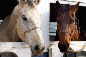 2015-11-06-1446831186-3765217-horse.jpg