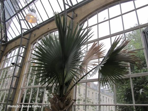2015-11-06-1446835871-4316246-Hortus_Botanicus_Orangery.jpg