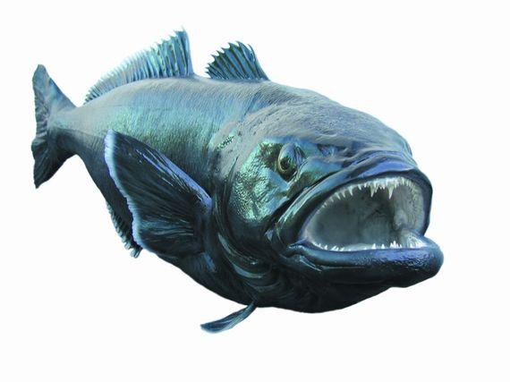 2015-11-11-1447256111-9527920-PatagoniaToothfish.jpg