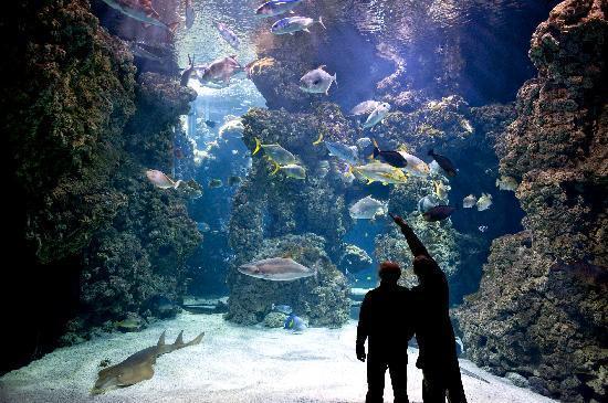 2015-11-12-1447327805-1376142-aquariummonaco.jpg