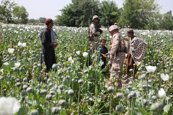 2015-11-13-1447386599-3381026-TalibanOpium_poppies_in_Helmand_a.jpg