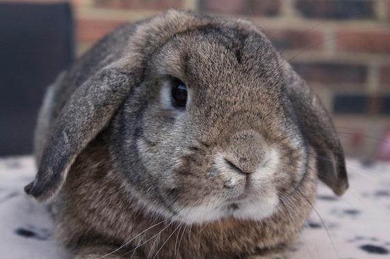 2015-11-16-1447642905-7905054-rabbit705763_1920.jpg