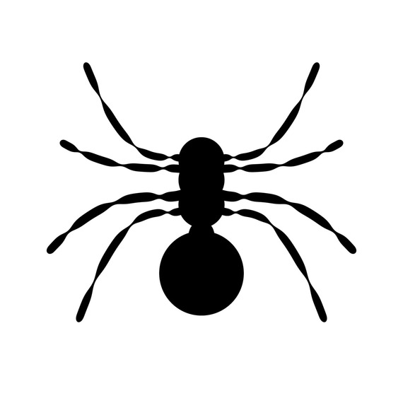 2015-11-19-1447923118-6325761-Spider.jpg