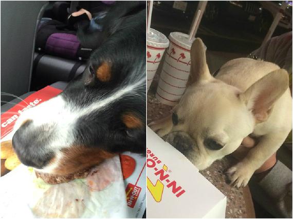 2015-11-19-1447975801-5268433-puppyinnnout.jpg