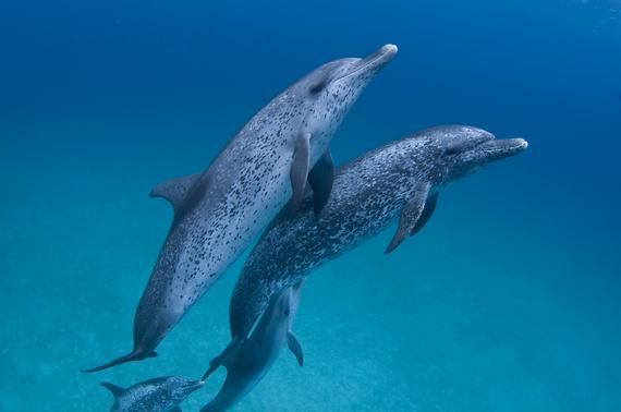 2015-11-20-1448039016-5678103-dolphins.jpg