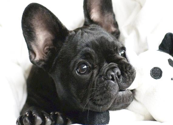 2015-11-23-1448308806-896888-cleandog.jpg